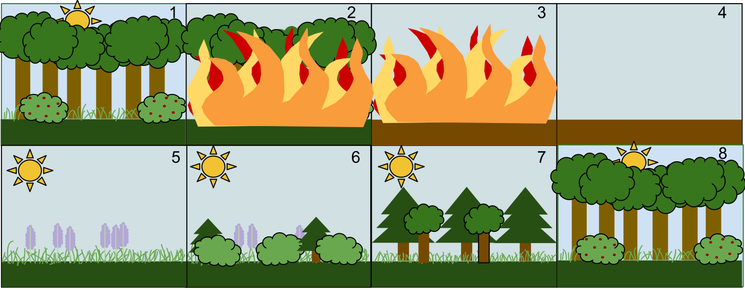 File:Secondary Succession.png