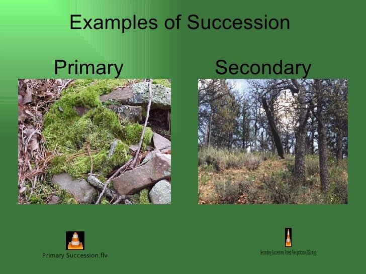 Secondary Succession Definition Biology