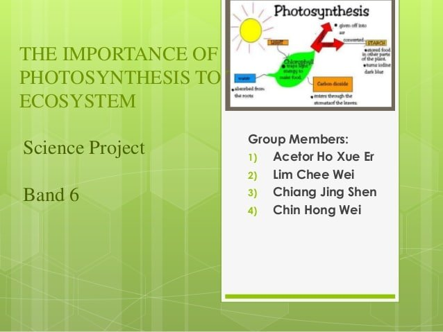 The importance of photosynthesis in the ecosystem
