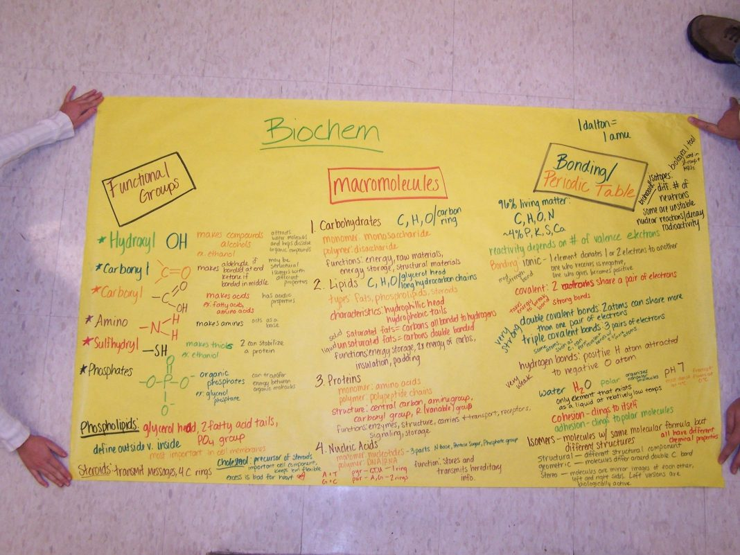 this poster was created by the ap biology students of
